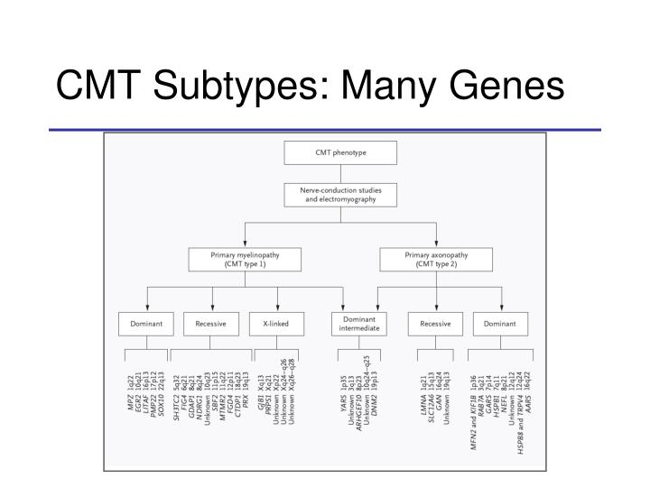 CMT Subtypes: Many Genes