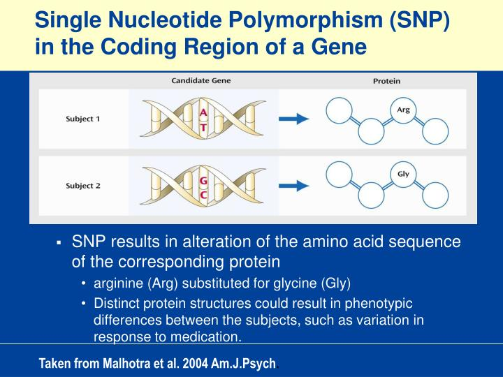 Single Nucleotide Polymorphism (SNP) in the Coding Region of a Gene