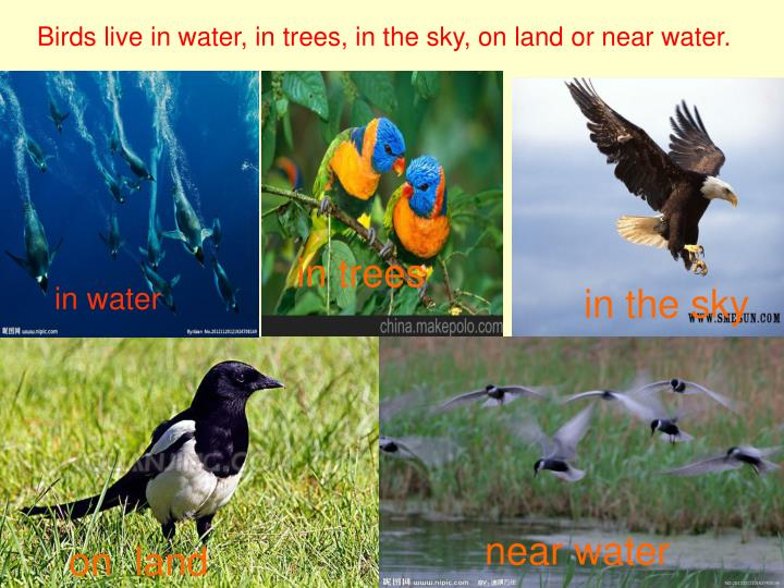 Birds live in water, in trees, in the sky, on land or near water.