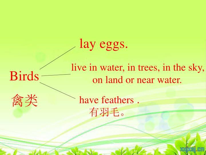 lay eggs.