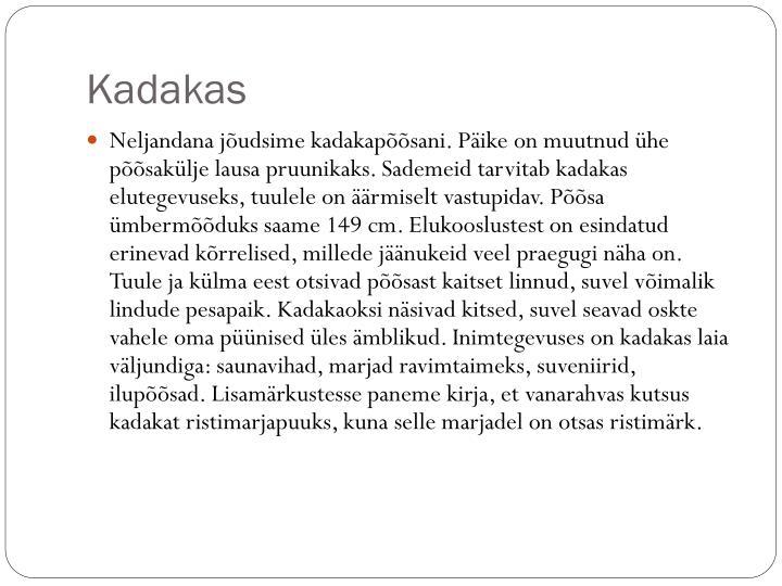 Kadakas