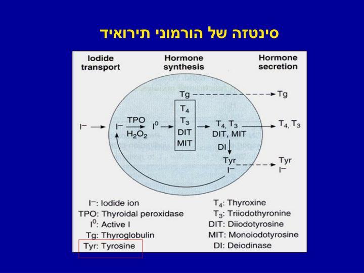 סינטזה של הורמוני תירואיד