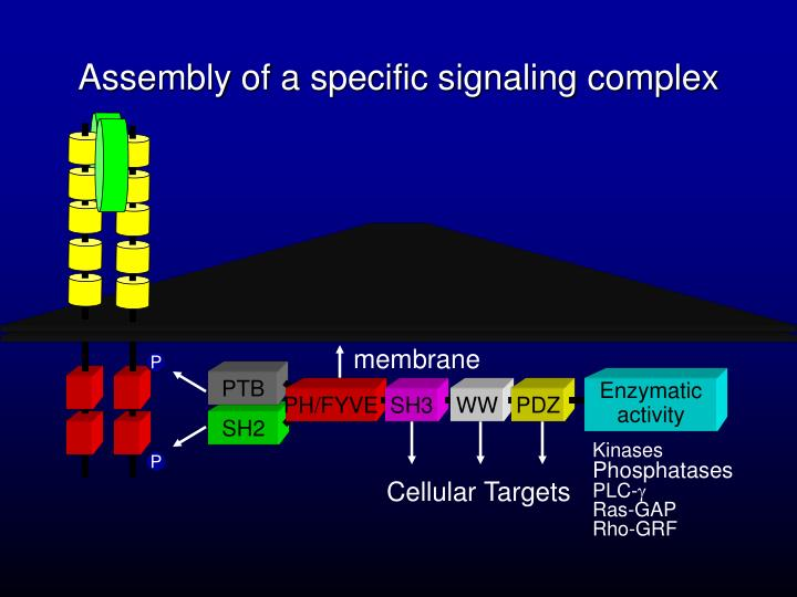 Assembly of a specific signaling complex