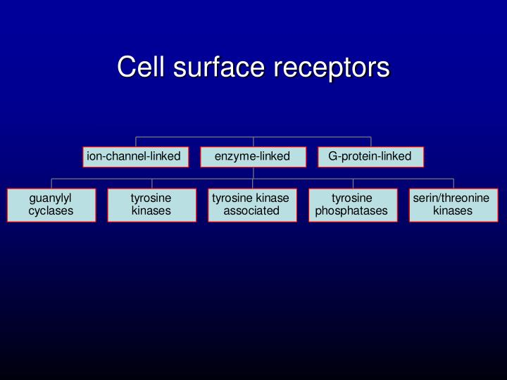 Cell surface receptors