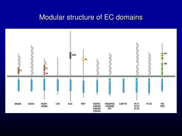 Modular structure of EC domains