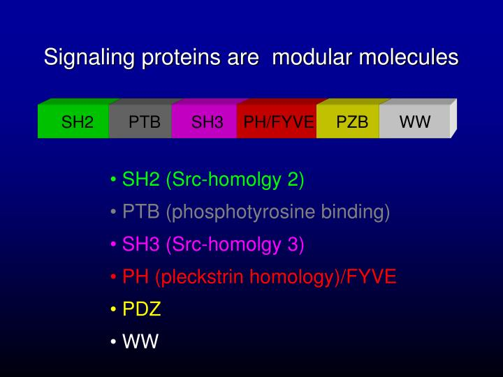 Signaling proteins are  modular molecules