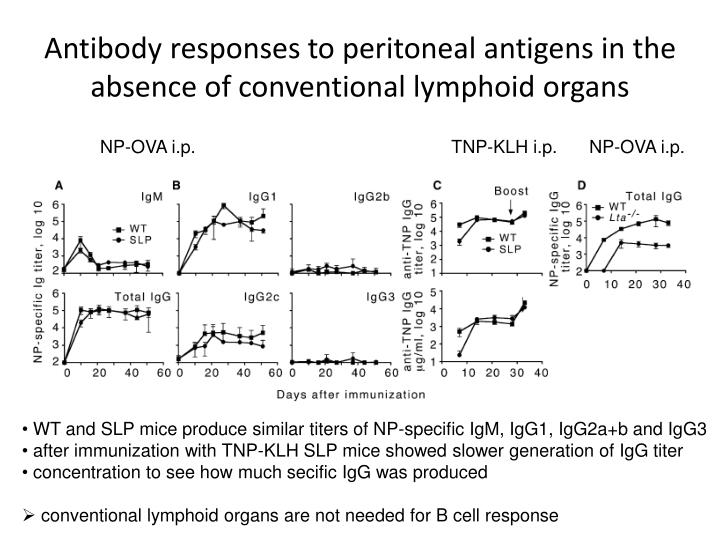 Antibody responses to peritoneal antigens in the absence of conventional lymphoid organs