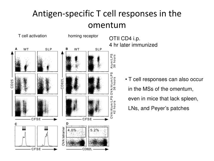 Antigen-specific T cell responses in the omentum