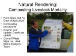 natural rendering composting livestock mortality