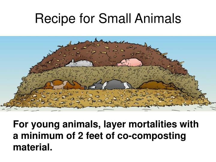 Recipe for Small Animals