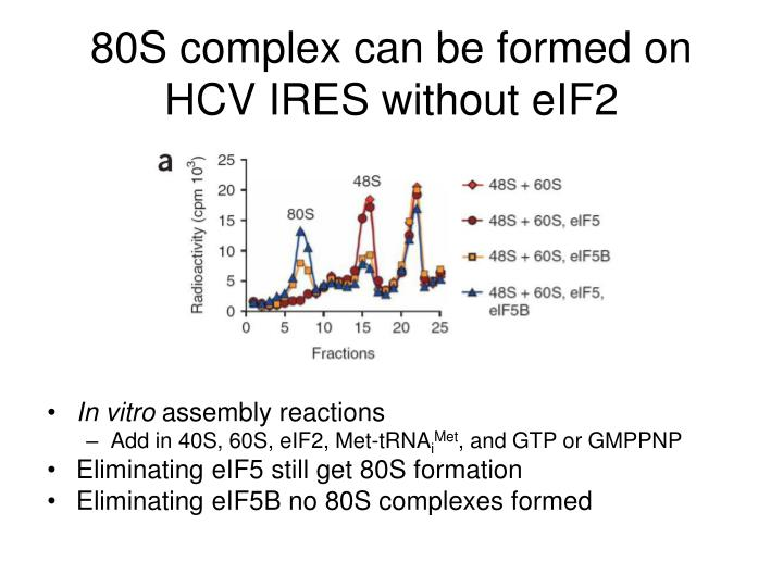 80S complex can be formed on HCV IRES without eIF2