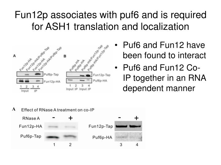 Fun12p associates with puf6 and is required for ASH1 translation and localization