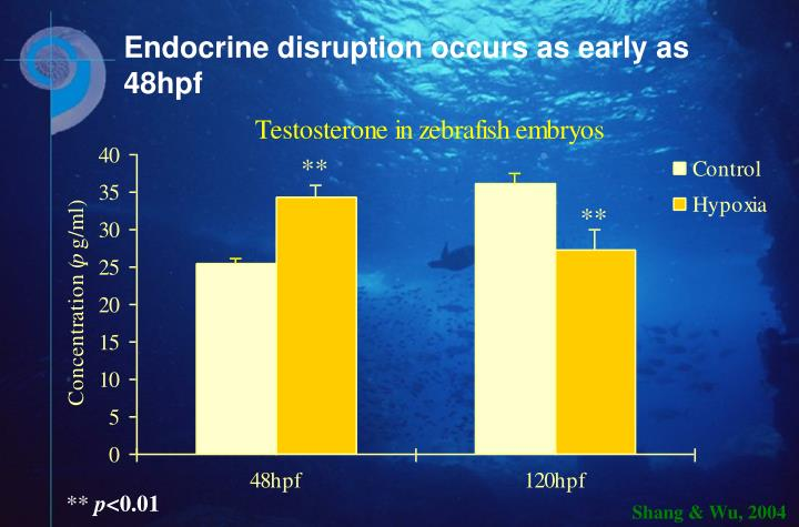 Endocrine disruption occurs as early as 48hpf