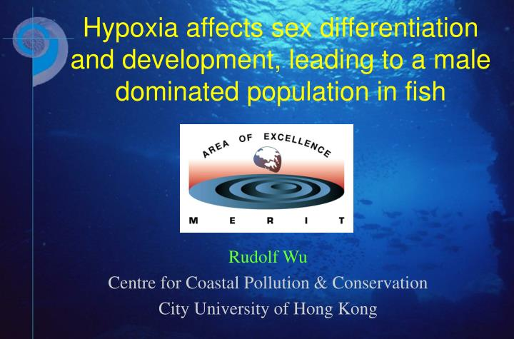 Hypoxia affects sex differentiation and development, leading to a male dominated population in fish