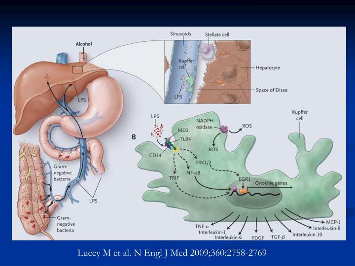 Lucey M et al. N Engl J Med 2009;360:2758-2769