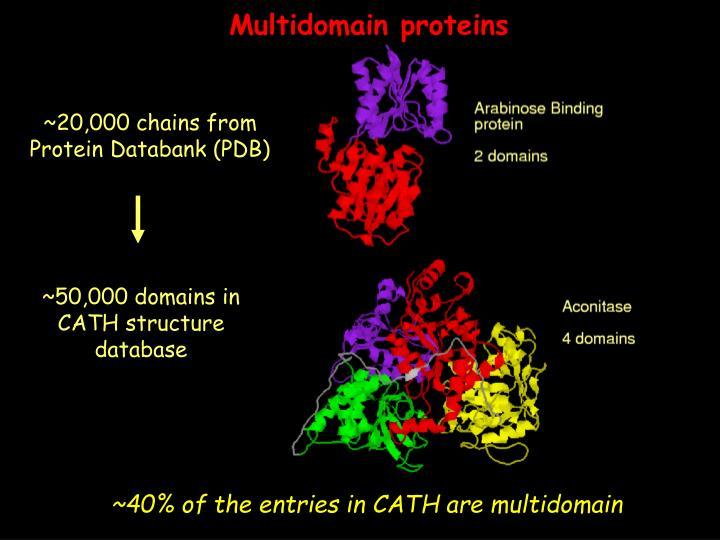 Multidomain proteins