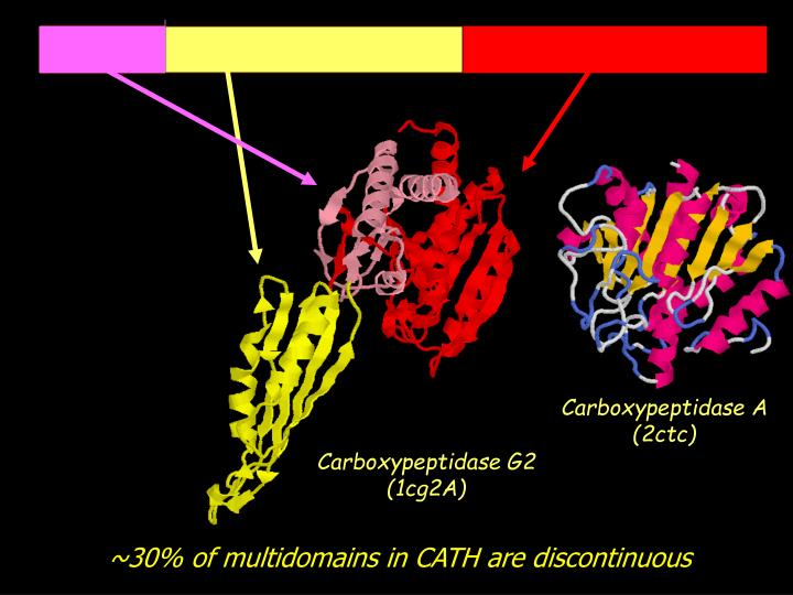 Carboxypeptidase A (2ctc)