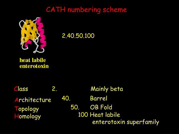 CATH numbering scheme