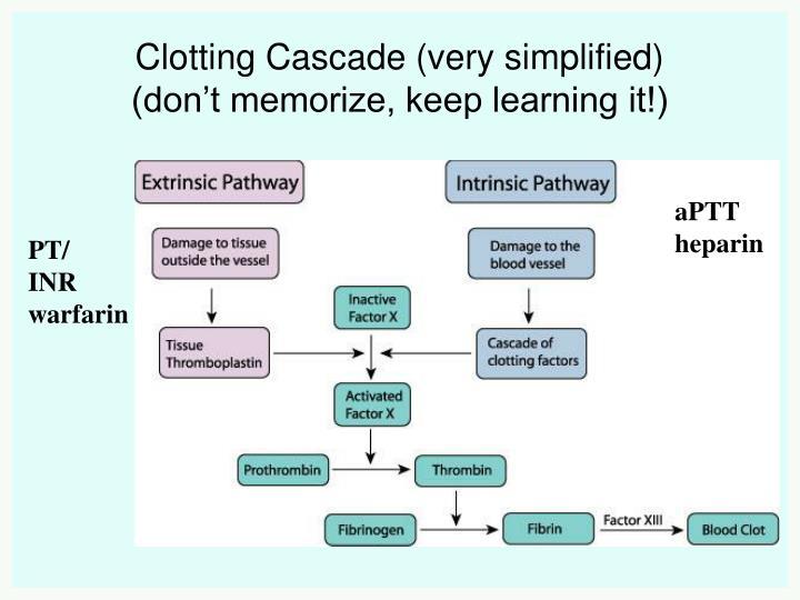 Clotting Cascade (very simplified)