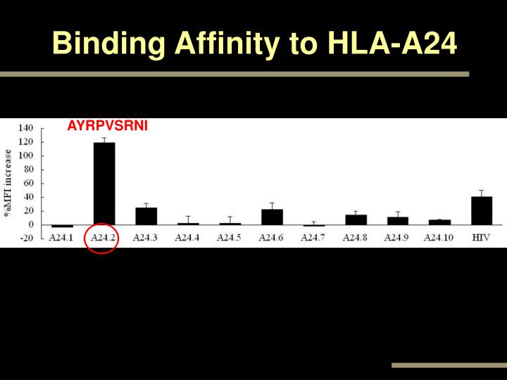 Binding Affinity to HLA-A24