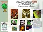 atractivos turisticos aprovechables im genes de la fauna