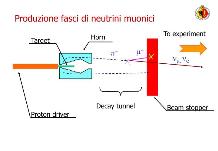 Produzione fasci di neutrini muonici