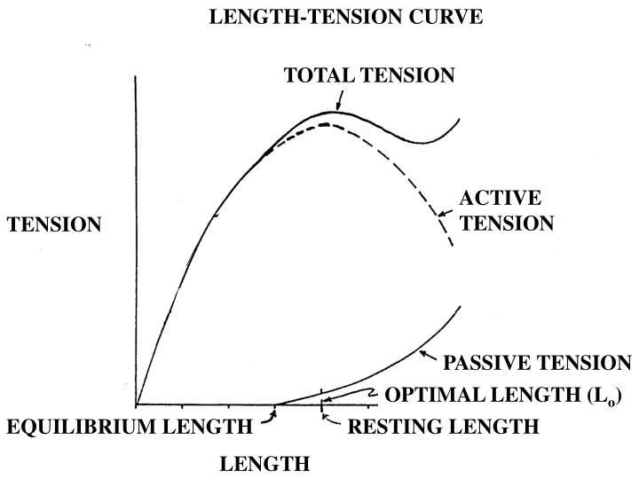 LENGTH-TENSION CURVE