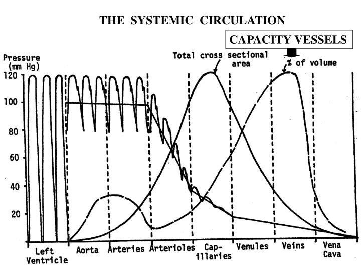 THE  SYSTEMIC  CIRCULATION