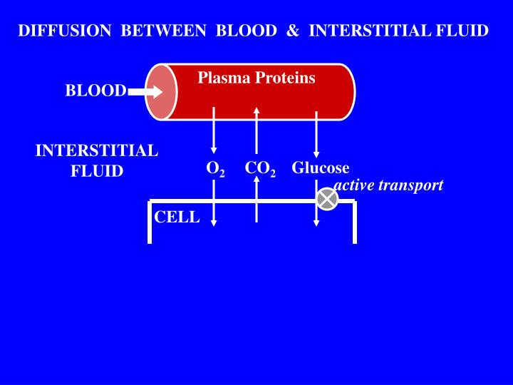 DIFFUSION  BETWEEN  BLOOD  &  INTERSTITIAL FLUID