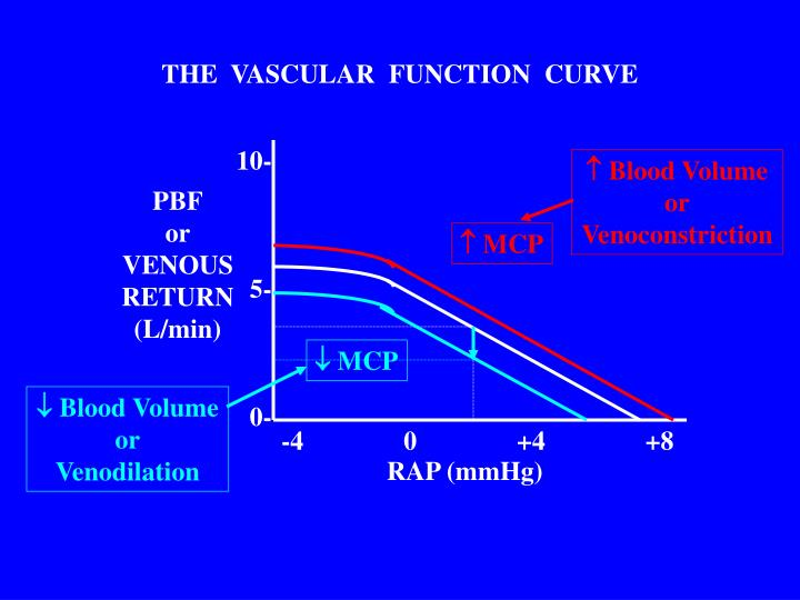 THE  VASCULAR  FUNCTION  CURVE