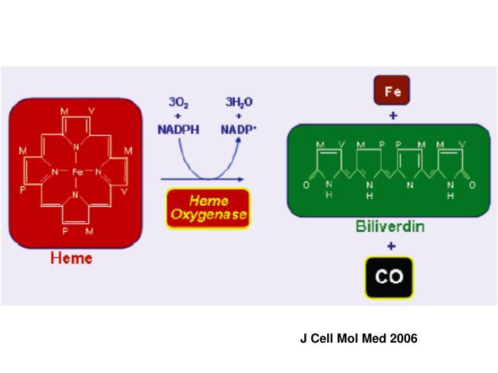 J Cell Mol Med 2006