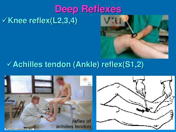 Deep Reflexes