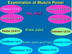 examination of muscle power4
