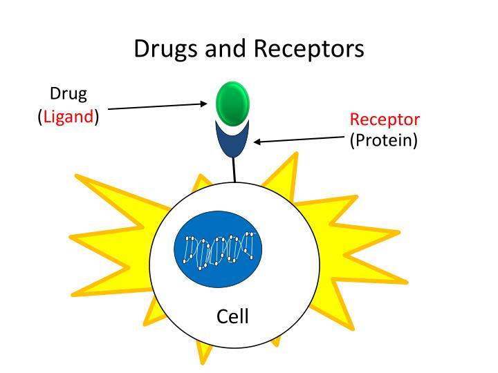 Drugs and Receptors