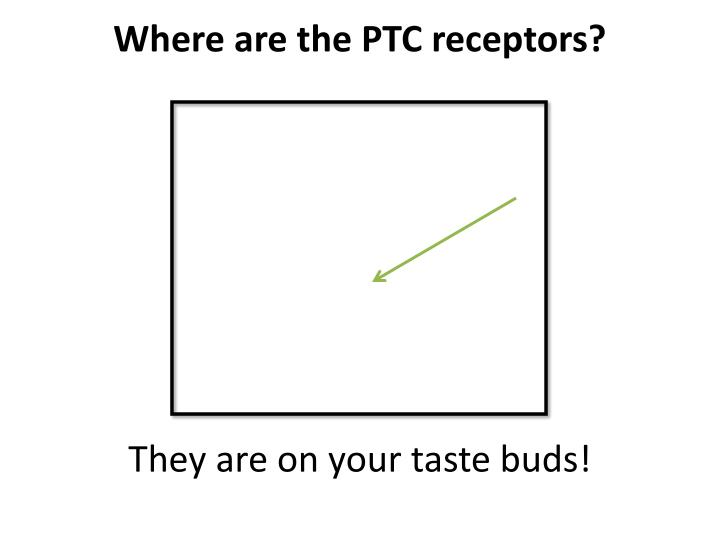 Where are the PTC receptors?