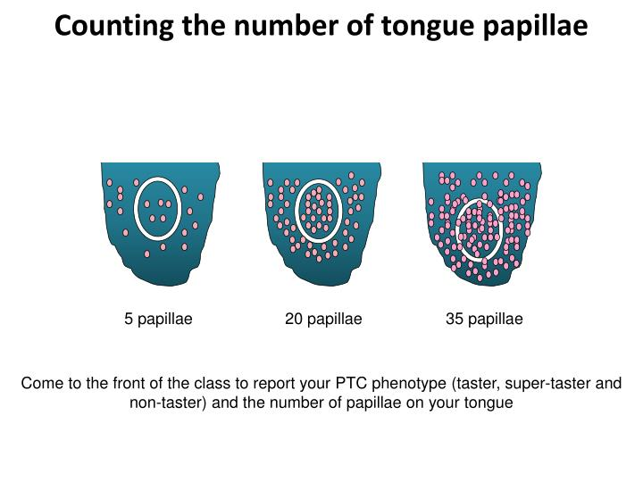 Counting the number of tongue papillae