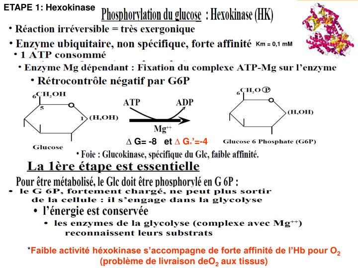 ETAPE 1: Hexokinase