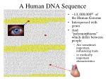 a human dna sequence1