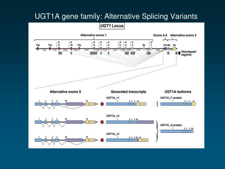 UGT1A gene family: Alternative Splicing Variants
