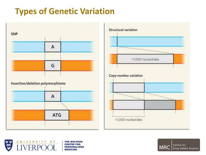 Types of Genetic Variation
