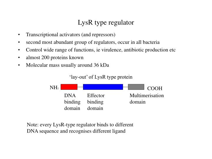 'lay-out' of LysR type protein