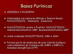 bases pur nicas