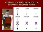 metabolismo amino cidos ramificados enfermedad del jarabe de arce
