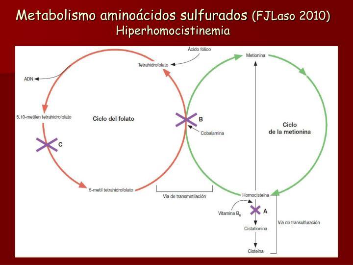 Metabolismo aminoácidos sulfurados