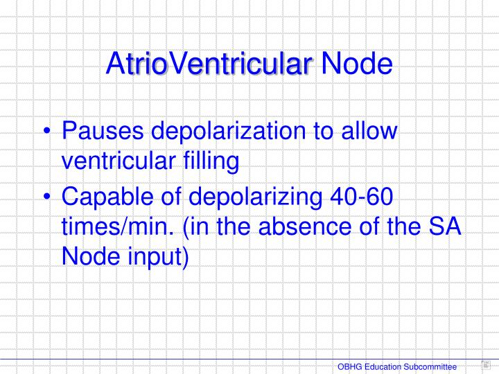 Pauses depolarization to allow ventricular filling