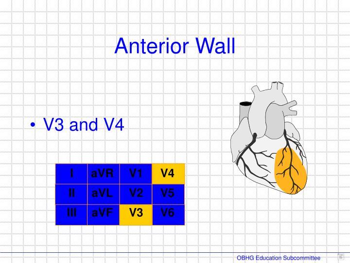 Anterior Wall