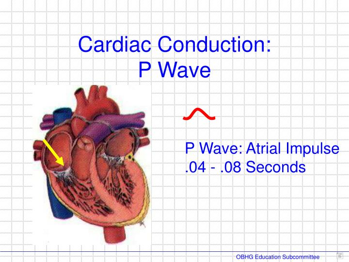 Cardiac Conduction: