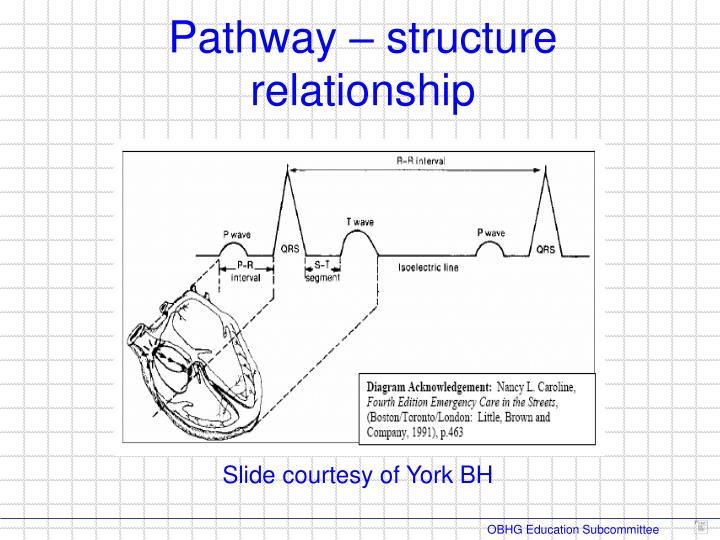 Pathway – structure relationship