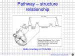 pathway structure relationship