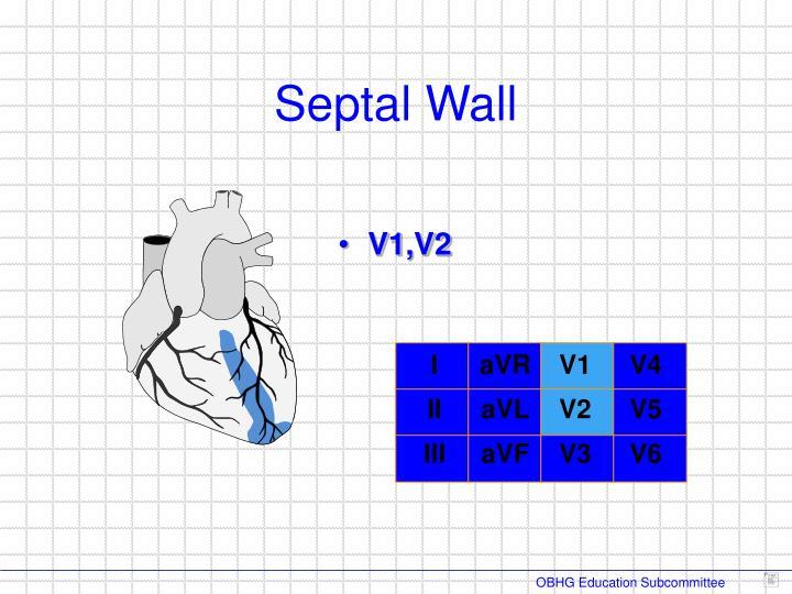 Septal Wall